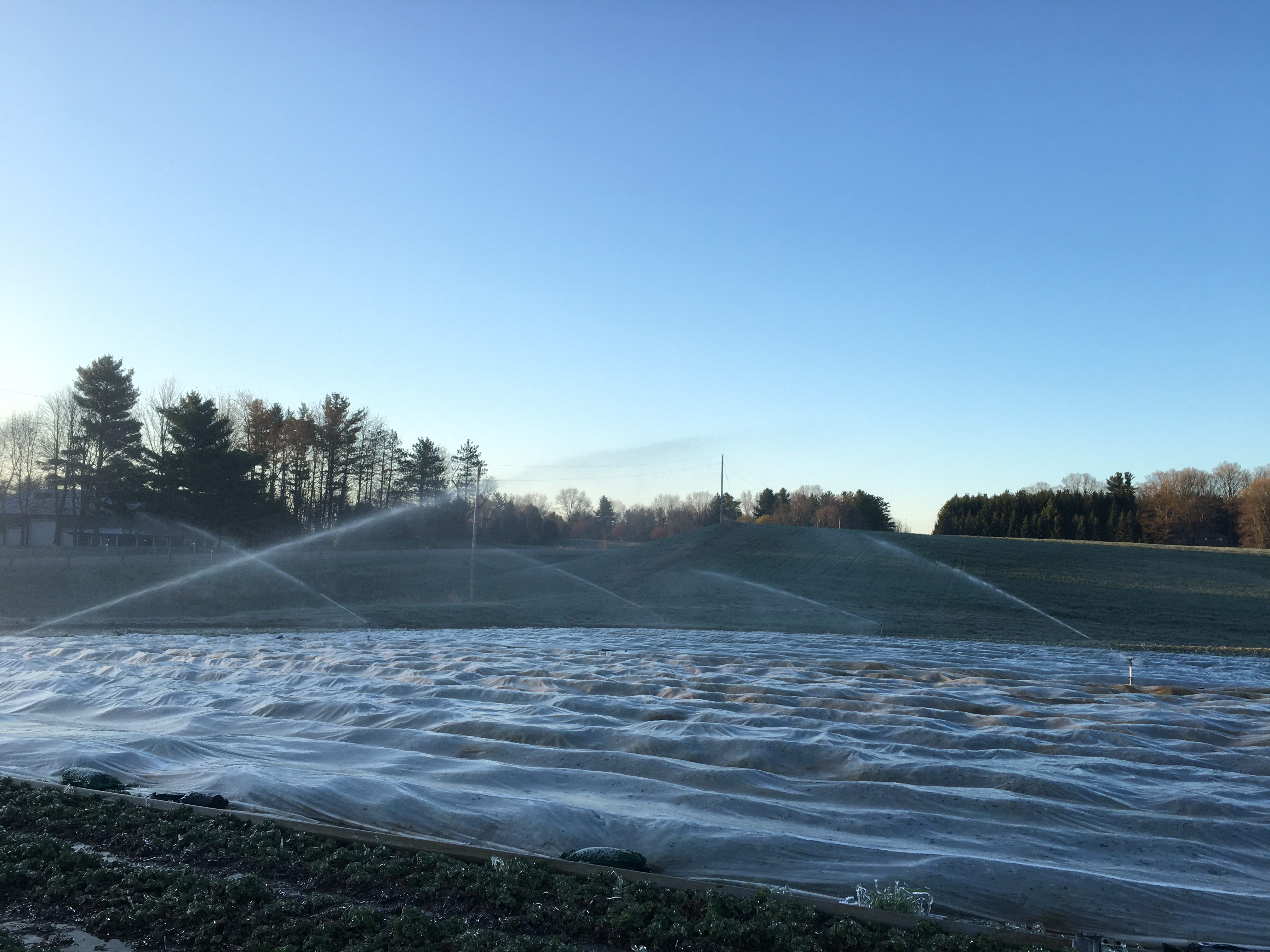 irrigating over row covers